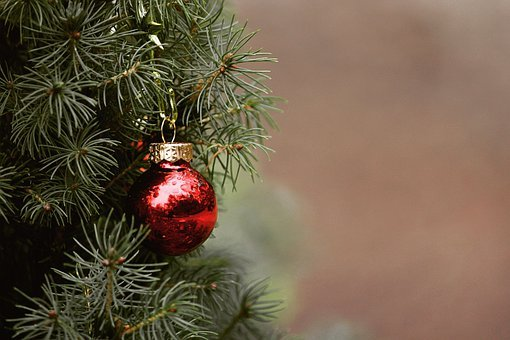 Christmas, Tree, Fir Tree