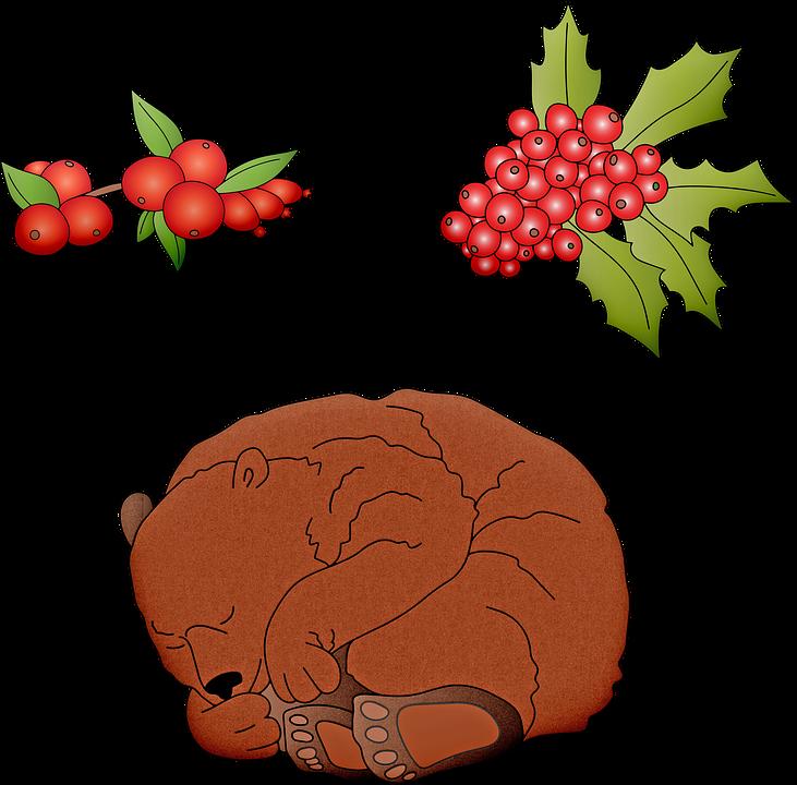 Oso Durmiendo, Hibernando, Oso, Hibernación, Invierno