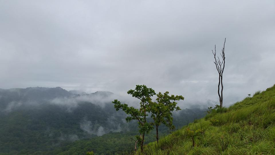 Kerala Idukki Nature