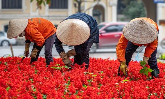 Berkebun, Orang Orang, Pekerja, Vietnam