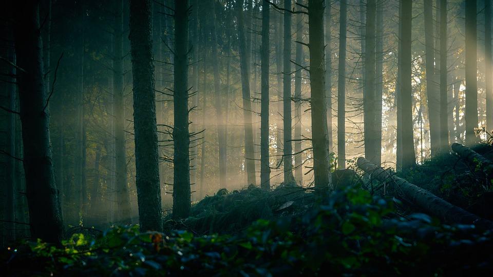 Blackwoods – Pixabay – Tama66