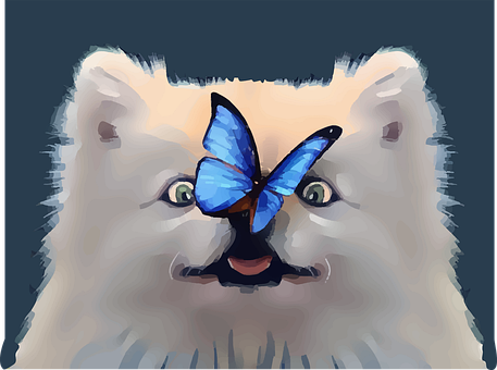 Dog, Butterfly, Cute, Nose, Playful