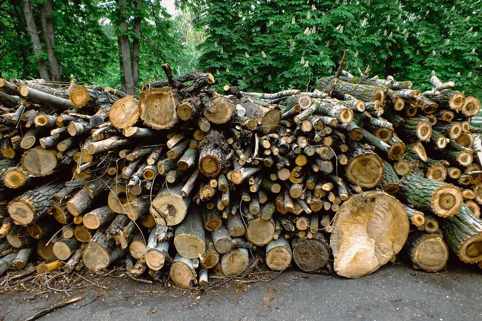 伐根, 桩, 树干, 树皮, 切, 详细, 砍伐, 柴, 林业, 燃料, 日志记录, 很多, 木材, 材料