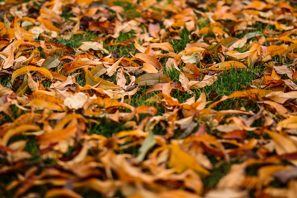 Autumn, Leaves, Noise, Mood, Yellow, Brown, Green