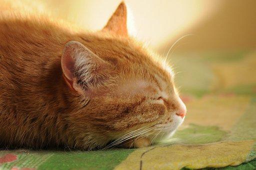 猫、夢、静かな時間、睡眠、日