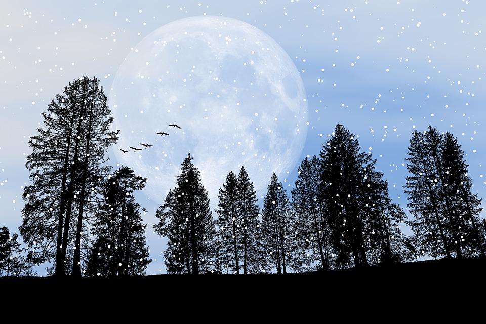 Freddo, Inverno, Neve, Natura, Foresta, Alberi