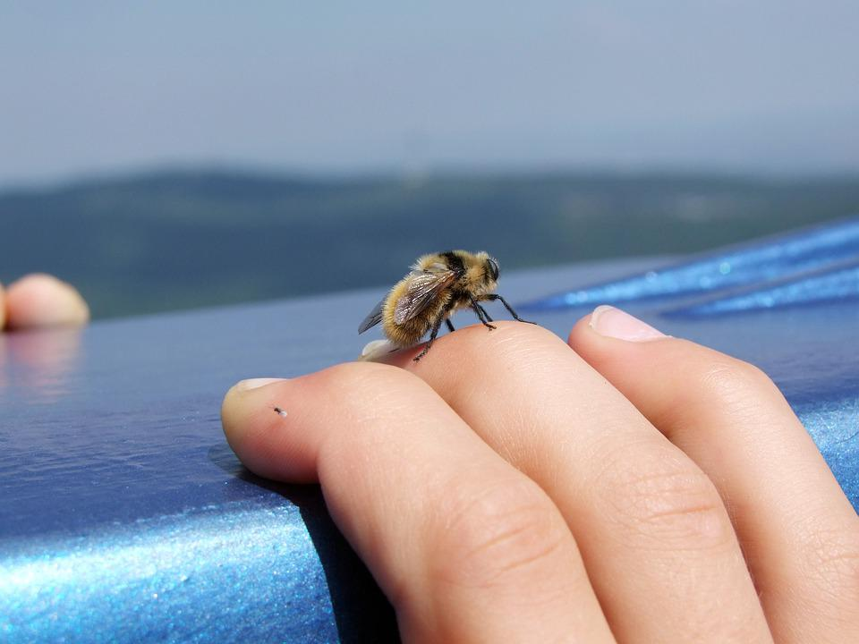 Bee, Hand, Insect, Relax, Macro