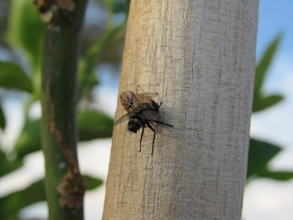 Pók rovar vagy bogár