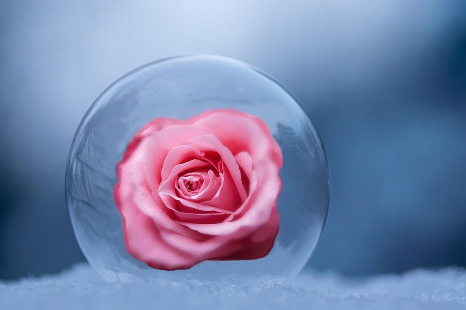 Bola, Bola De Gelo, Flor Rosa, Compondo, Rosa, Flor
