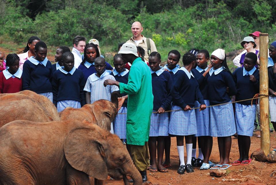 La Alimentación De Los Elefantes Bebés