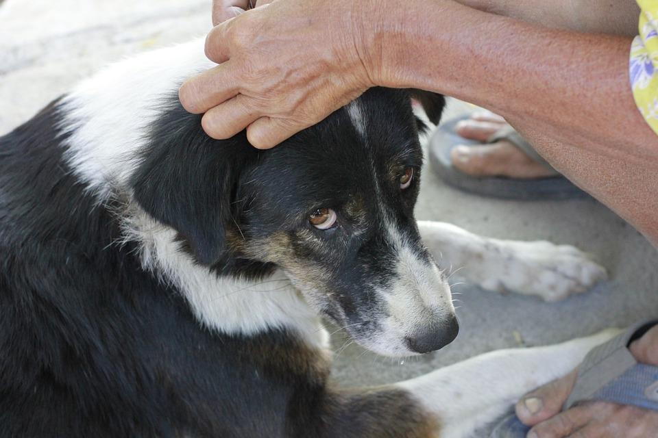 Pies, Pielęgnacja, Zwierzęta, Opieki Dla, Przyjaźń