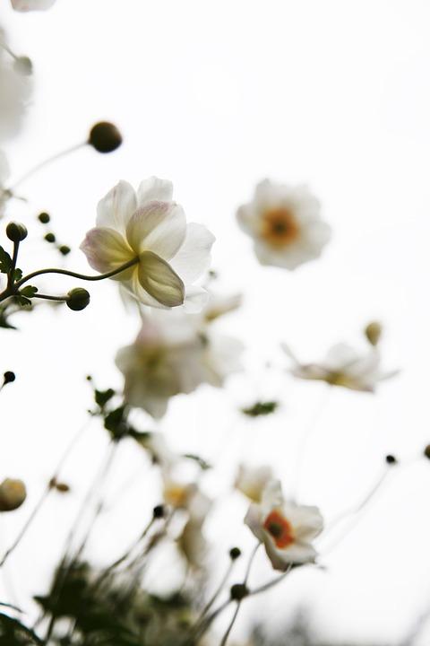Putih Bunga Sederhana Foto Gratis Di Pixabay