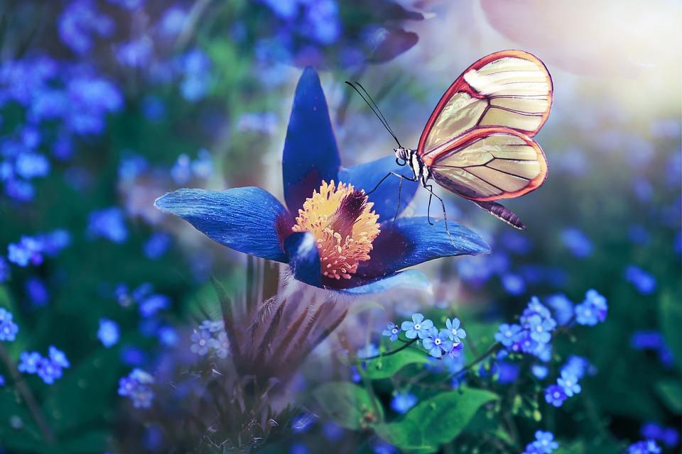 Farfalla, Fiori, Ala, Blu, Colorato, Primavera