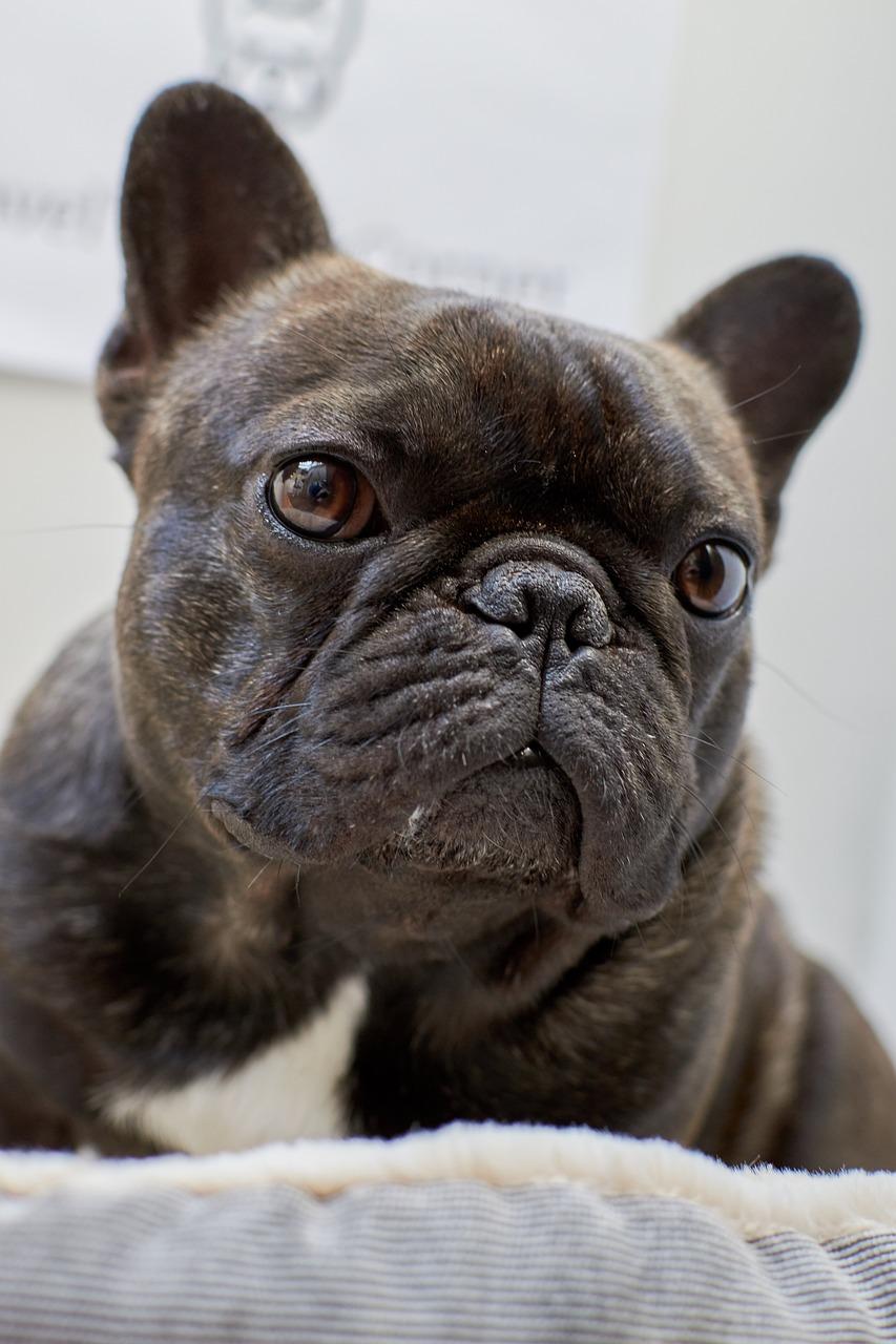 Koira Muotokuva Hellitella Ilmainen Valokuva Pixabayssa