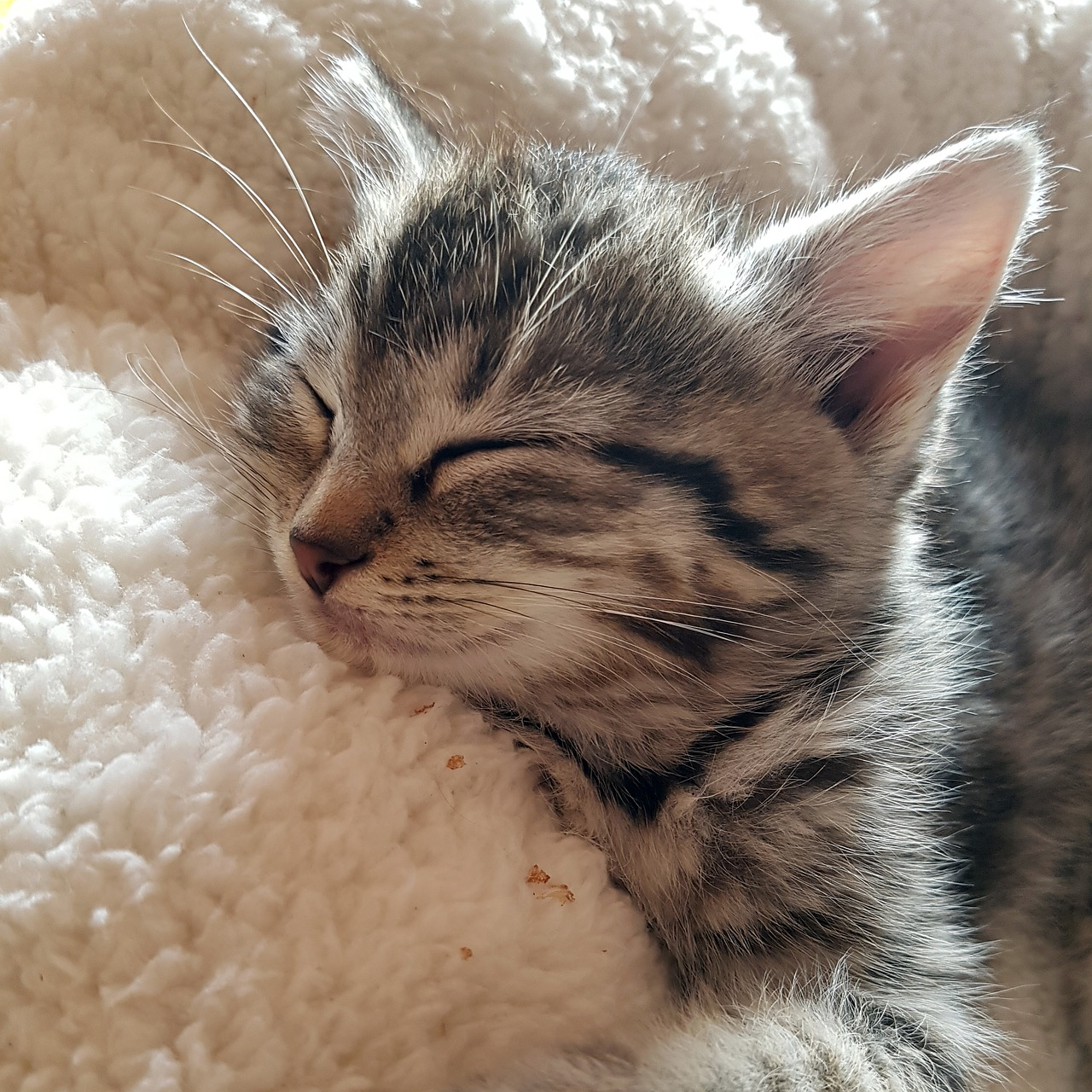 Kitten Soft Sleeping Cat - Free photo on Pixabay