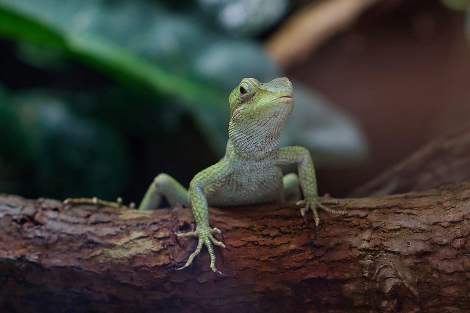 Terarium Gecko Reptil - Foto gratis di Pixabay