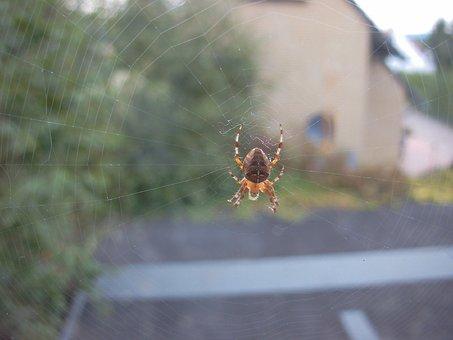 Spindel, Spiderweb, Web, Arachnid, Natur