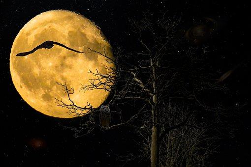 Hintergrund, Fantasie, Nacht, Vollmond