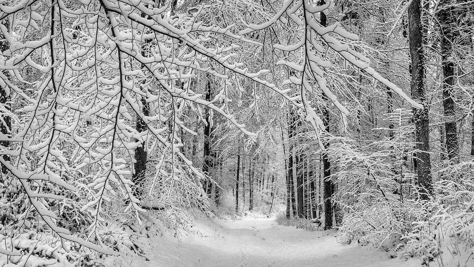 フォレスト, 冬, 森の小道, 美的, 雪, 冬の, 自然, 木, 風景, 雪の風景, 冬の魔法, 白