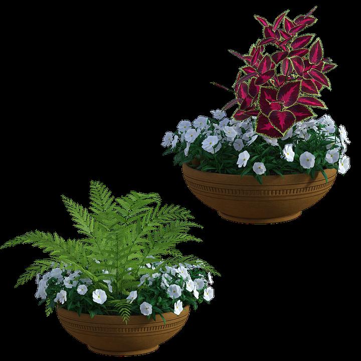 Vaso Fiori.Giardino Fioriere Piante Immagini Gratis Su Pixabay