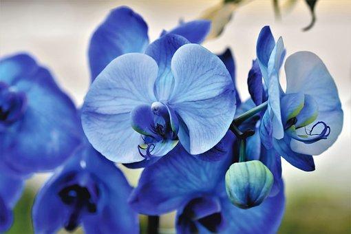 ラン, 蘭の花, 花, ブルーム, 植物, 自然, エキゾチック, 熱帯