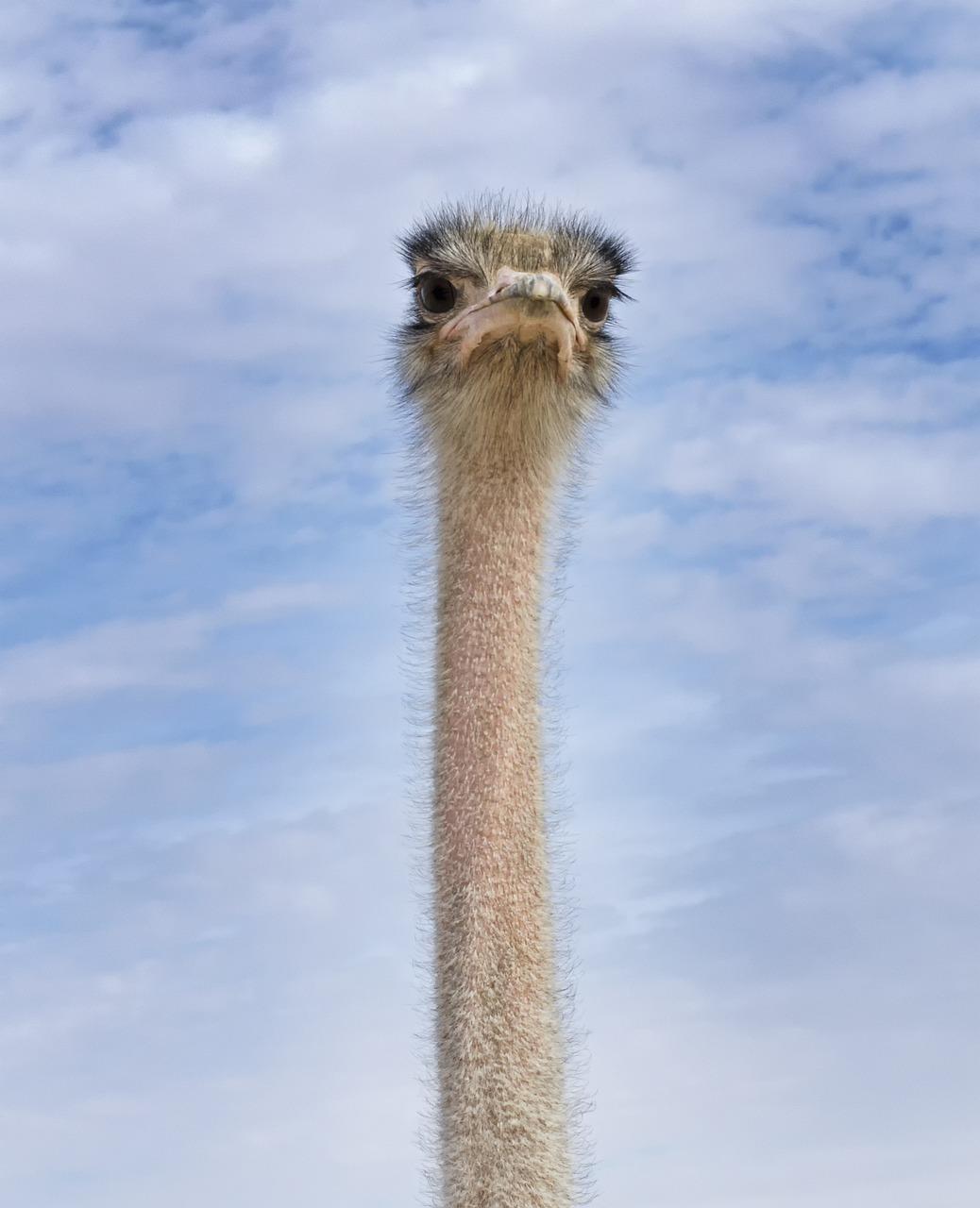 Разноцветный страус картинка татьянин день