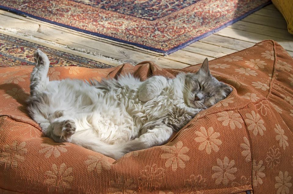 Slapende Kat, Geen Zorgen, Kat Slaapt Op De Rug