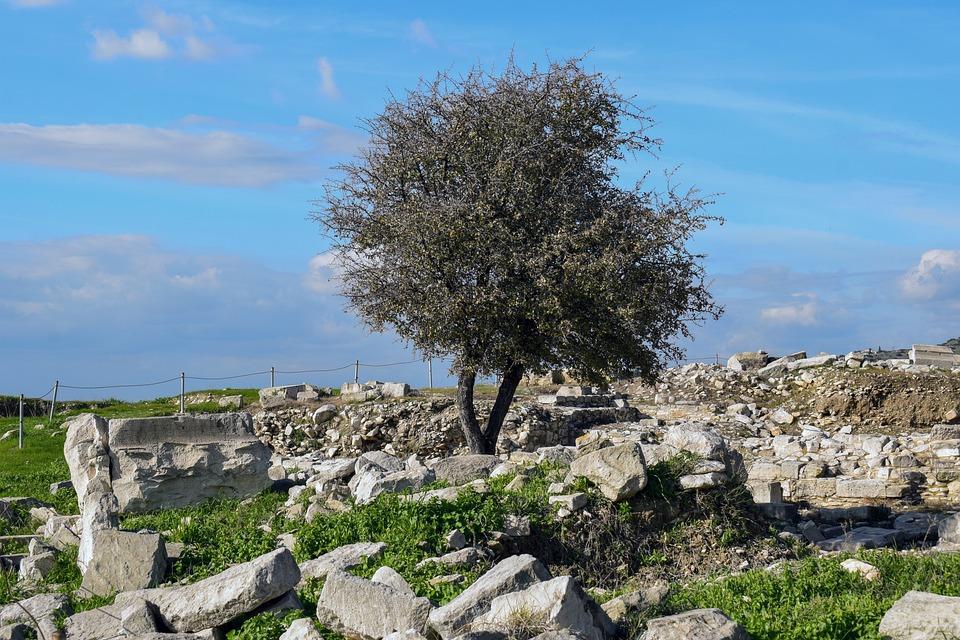 Tree, Stones, Archaeology, Amathus, Cyprus
