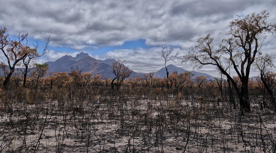 Incendio Forestal, Devastación, Australia, Paisaje