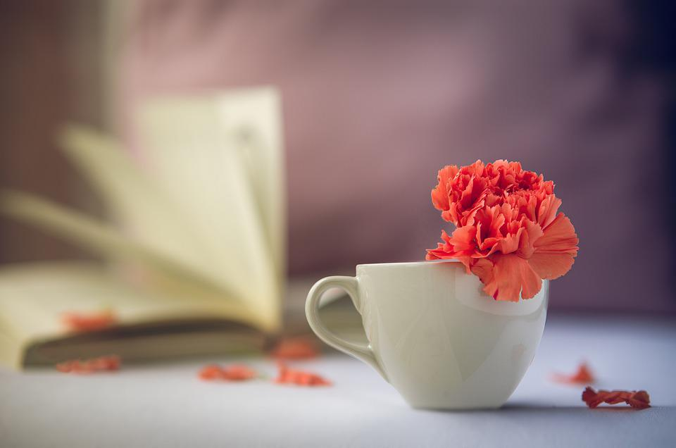 花, 赤, 残りの部分, 穏やかな, 緩和, 読み取り, 時間, 落ち着き, サイレント, 本, リラックス