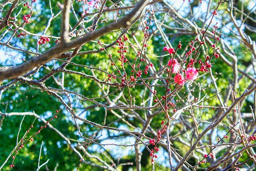 Wood, Plum, Flowers, Nature, Plants