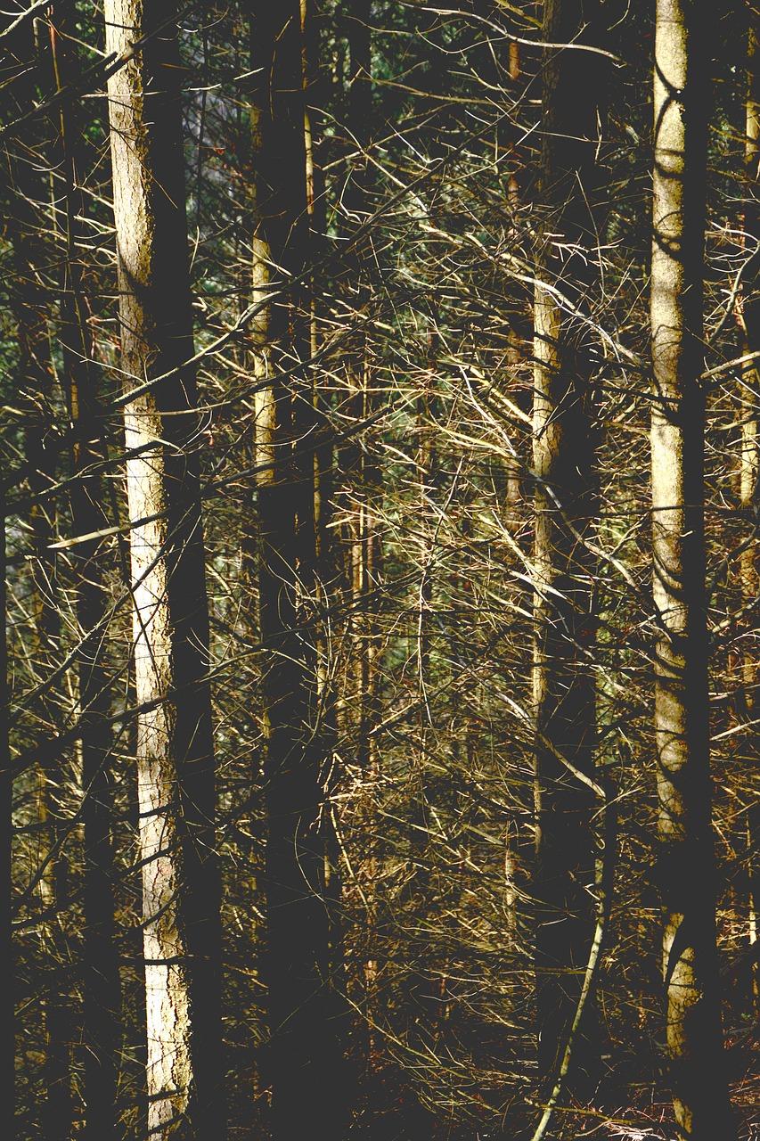 Pohon Hutan Kekeringan Foto Gratis Di Pixabay