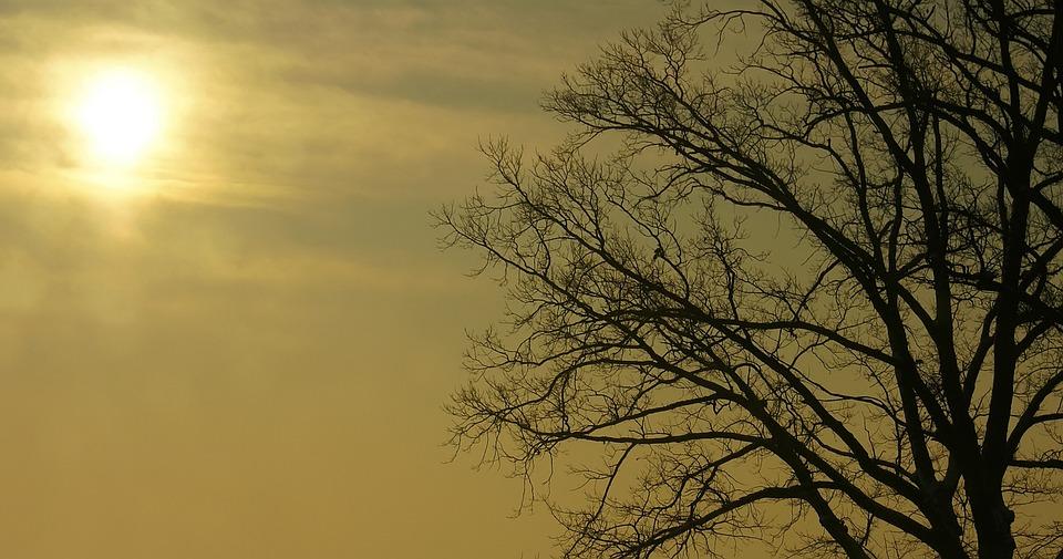 El Sol Árbol Cielo - Foto gratis en Pixabay