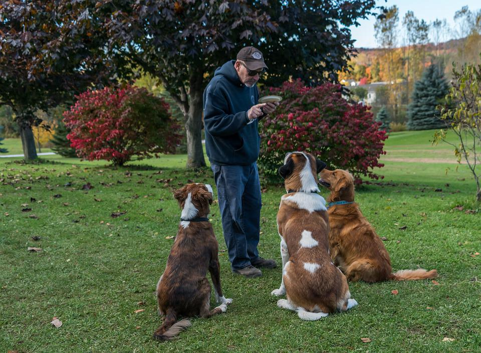 Scientific Dog Training Method