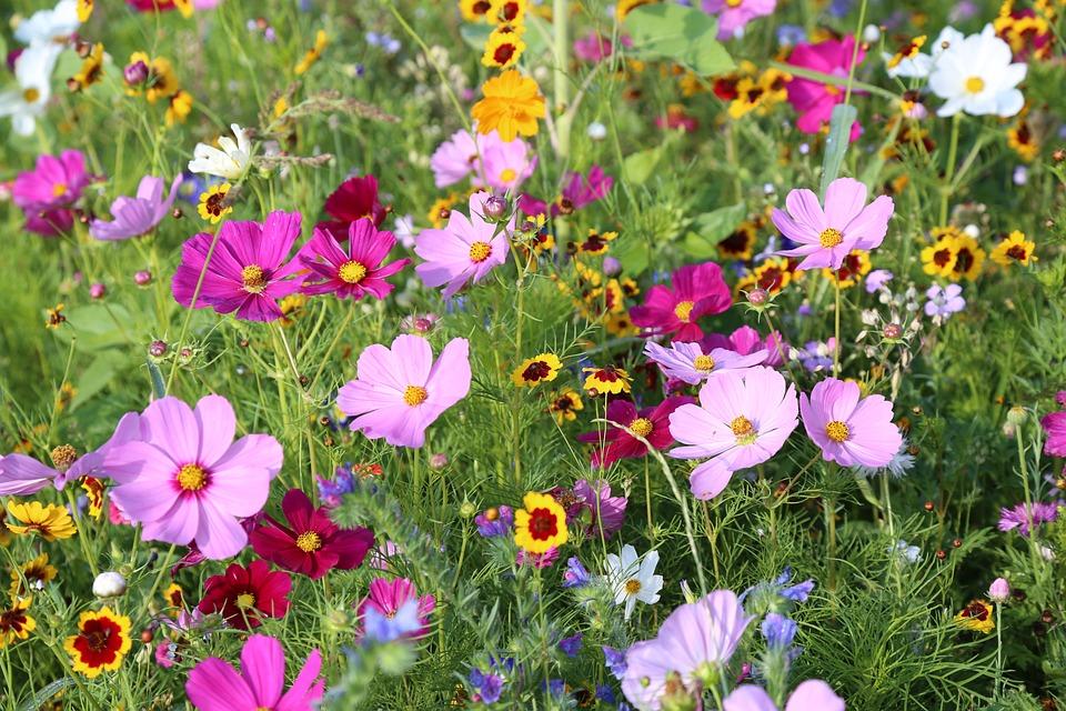 Kukat Niitty Kukka - Ilmainen valokuva Pixabayssa