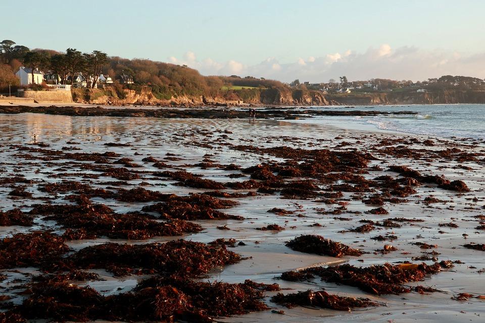 Ocean, Plage, Algues, Mer, Bretagne, Sable, Nature