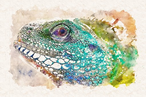 The Lizard, Gad, Colorful, The Tropical