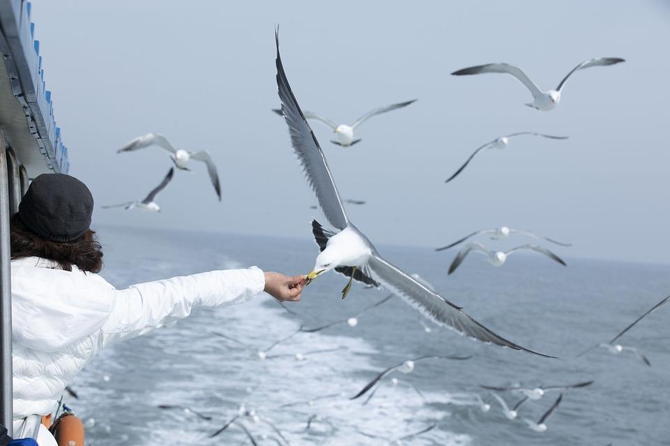 Чайка, Море, Чаек Стая, Кормление