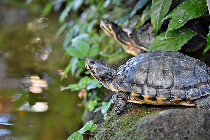 лимпопо красноярск фото черепахи модели фотографиях