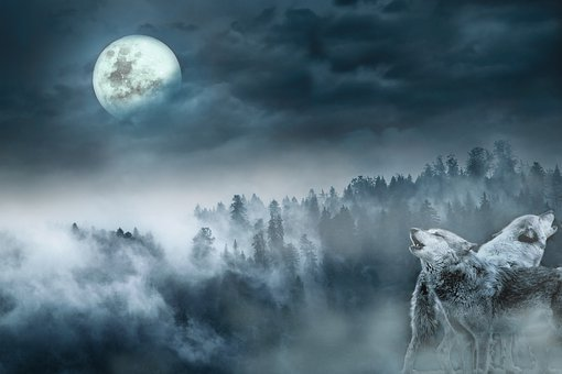 Landschaft, Wölfe, Wald, Nacht, Mond