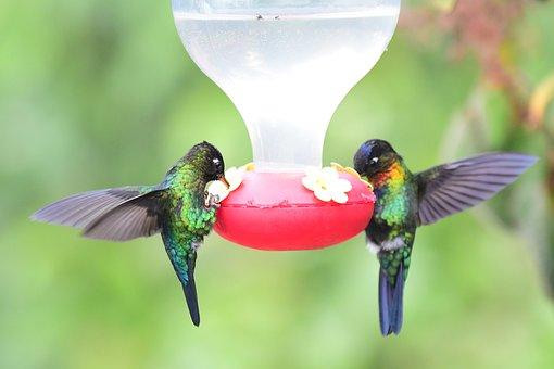 Feeding, Feeder, Exotic, Birds, Humming