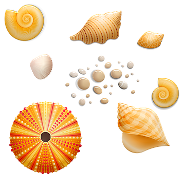 Seashells, Shell, Beach, Sea, Ocean
