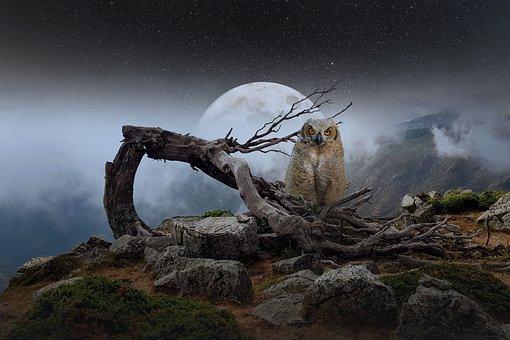 Landschaft, Berge, Vollmond, Eule, Nebel