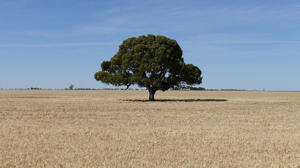 Árbol, Tierras De Cultivo, Victoria, Australia