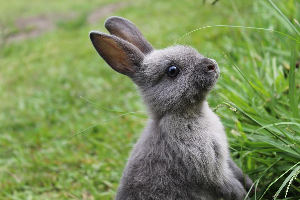 Rabbit, Bunny, Easter, Grass, Cute, Fur, Animal, Pet