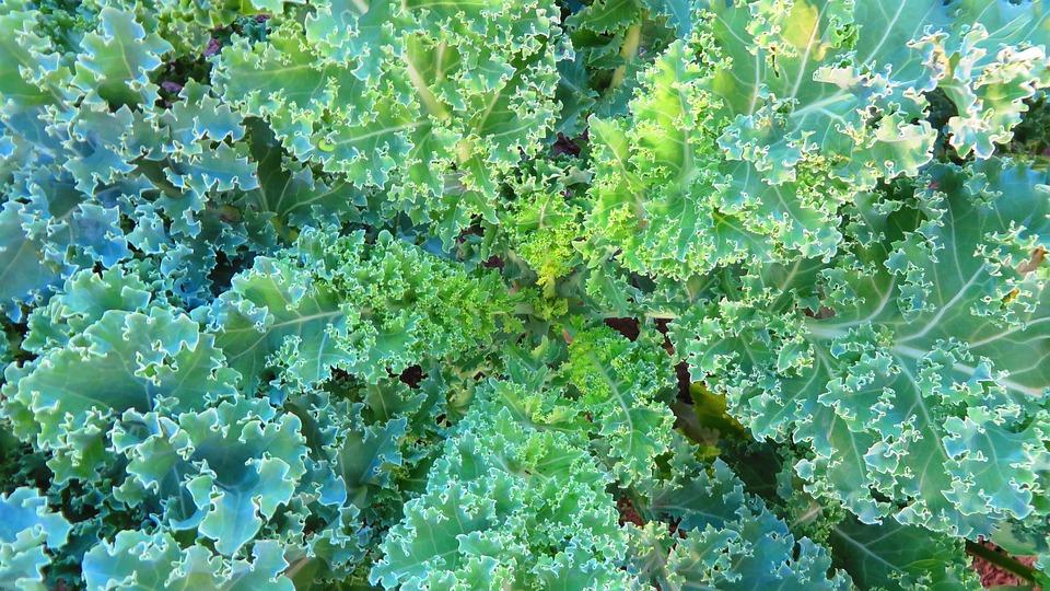 Cavolo, Verde, Un Vegetale, Fresco, Organico, Sano