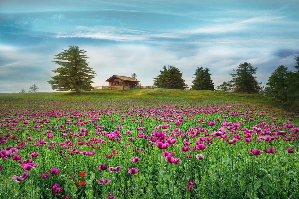 Landscape, Spring, Flowers, Field, Cabin, Sky, Clouds