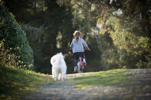 女の子, マウンテンバイク, 犬, 夏, 休暇, 旅, 楽しい, 自転車
