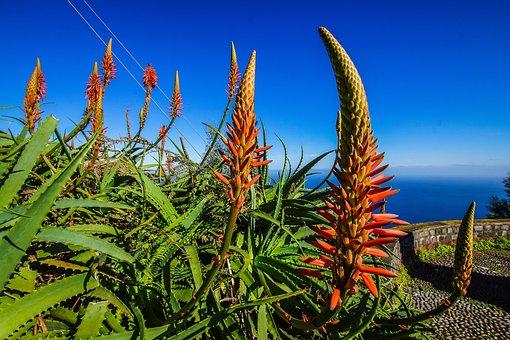 Portugal, Madeira, Insel, Wandern