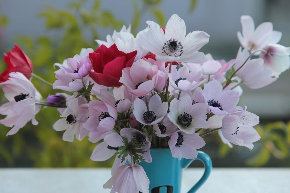Anemone Flowers Flower - Free photo on Pixabay